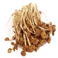 茶树菇 茶薪菇 真正冰菇苞不开伞 粮油特产干货