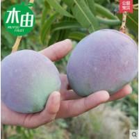 攀枝花吉禄芒果新鲜紫芒